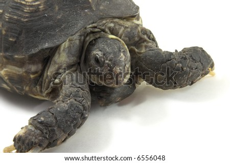 Turtle close up on a white background - stock photo