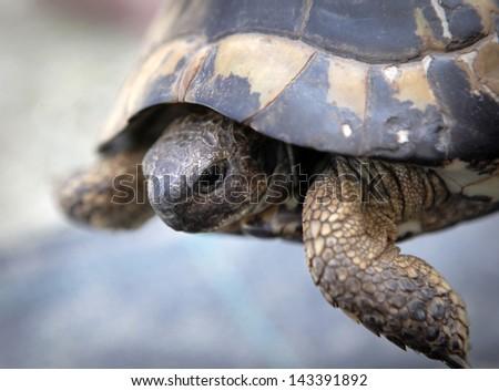 Turtle closeup - stock photo