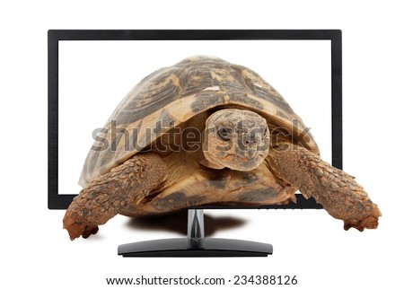 turtle comes from computer monitor, isolated on white background - stock photo