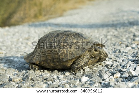 Turtle crawling on the road.