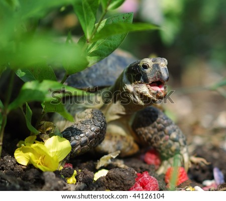Turtle eating - stock photo
