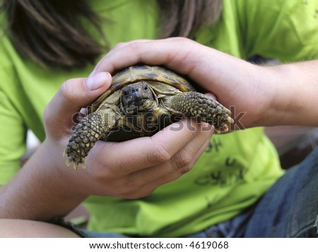 Turtle in child hands - stock photo