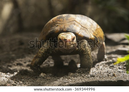 Turtle in Manila zoo, Philippines - stock photo