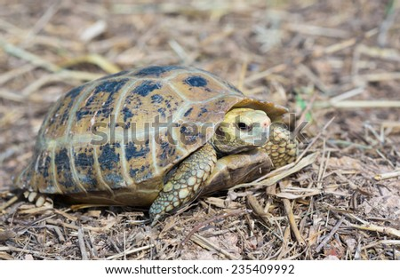 Turtle in nature,Thailand - stock photo