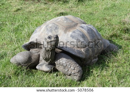 Turtle observing vicinity at green meadow - stock photo