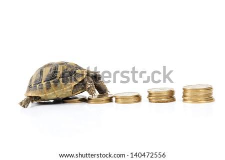 Turtle on money - stock photo