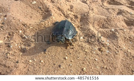 Turtle on the beach.