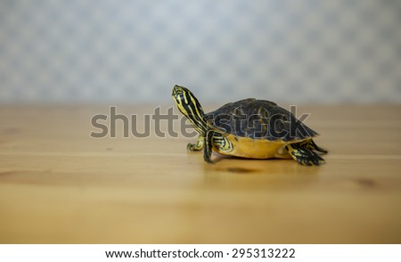 Turtle on wooden table walking across the image - stock photo