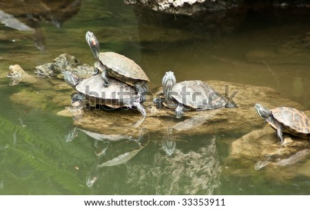 Turtle pond - stock photo