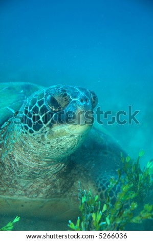 turtle's lunch - stock photo