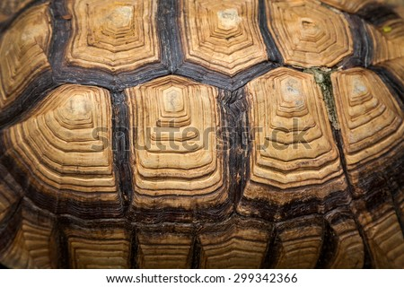 turtle shell - stock photo