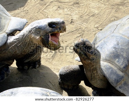 Turtle Snapping at Another - stock photo