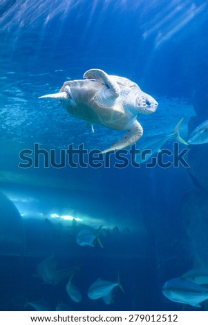 Turtle swimming in a tank at the aquarium
