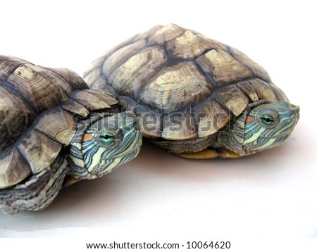 Turtle Vision - stock photo