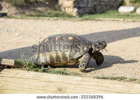 Turtle walking on the road in Keramikos in Athens city - stock photo