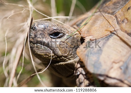 turtle with angry look,close up - stock photo