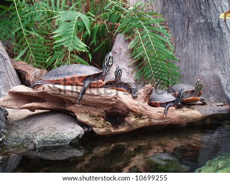 Turtles at the zoo
