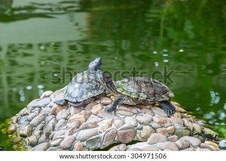 Turtles on the rocks with green water background - stock photo