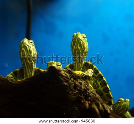 Turtles warming themselves under lamp - stock photo