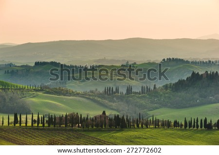 Tuscan cypress trees in the spring landscape painted the light of the setting sun. - stock photo