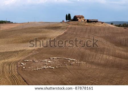 tuscan landscape - stock photo