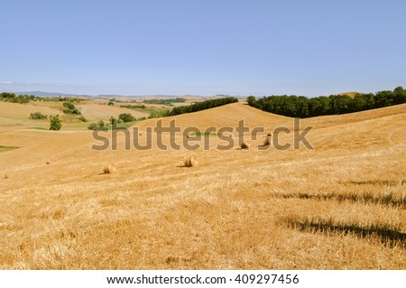 Tuscan landscape with yellow wheat fields in Siena