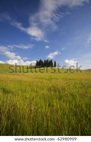 Tuscany cypresses - stock photo