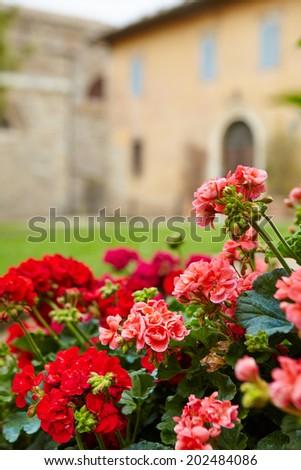 Tuscany flowers background - stock photo