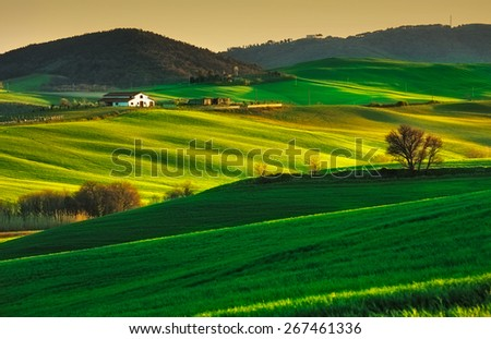 Tuscany, rolling hills on sunset. Volterra rural landscape. Green fields, farmland and trees. Italy - stock photo