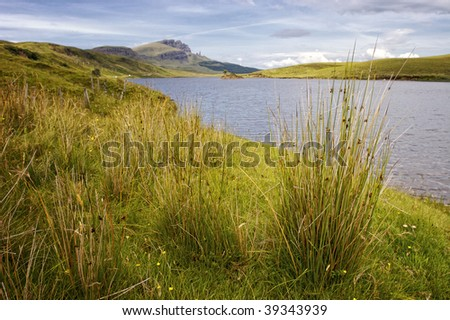 tussock at Loch Fada with Old Man of Storr in the background on Isle of Skye, Scotland - stock photo