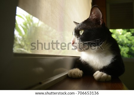 Tuxedo cat sitting on windowsill and looking outside.
