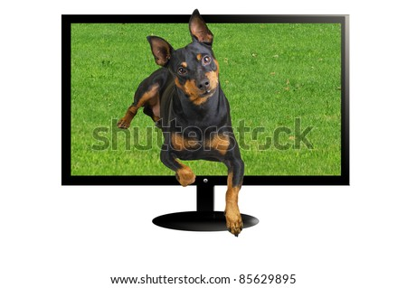 TV 3 D with dog in three dimension - stock photo