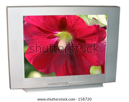 tv with flower - stock photo