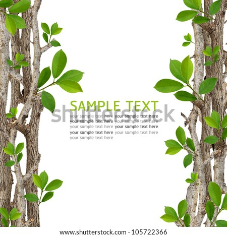 Twig and green leaf frame isolated on white background. - stock photo