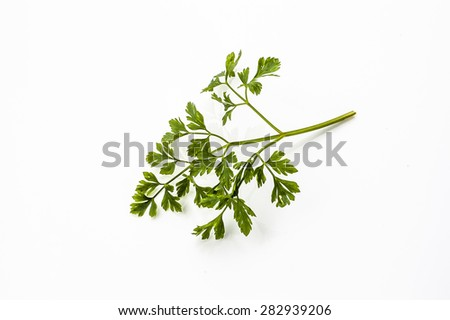 Twig of parsley isolated on a white background