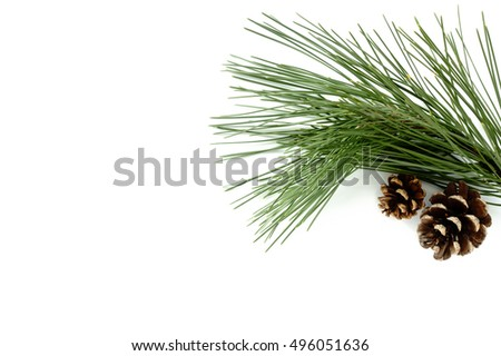 Twig of real natural Pine Tree and two natural Pine Cones isolated on white background.