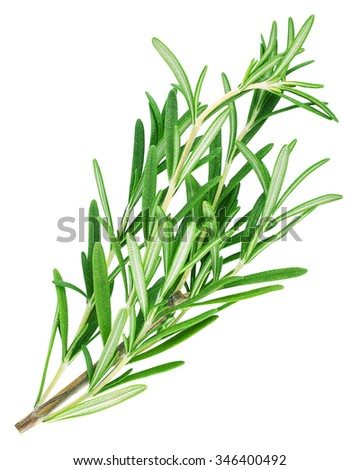 Twig of rosemary isolated on a white background - stock photo