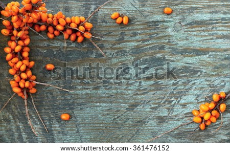 Twig sea buckthorn berries on a wooden background. Autumn decorative frame or border with fresh ripe sea-buckthorn berries and old wooden plank. - stock photo