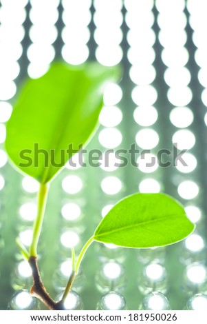 twig with green leaves on a background of the LED panel
