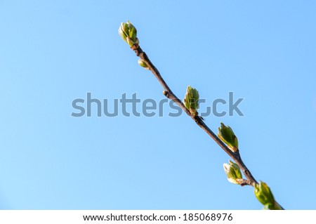 Twig with spring buds on blue sky background - stock photo