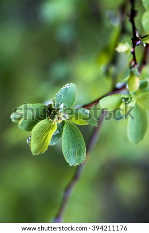 Twig with young leaves - stock photo