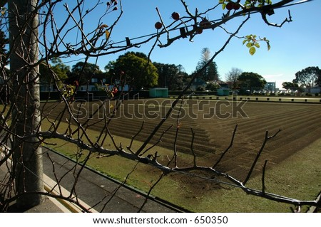 twigs and fences - stock photo