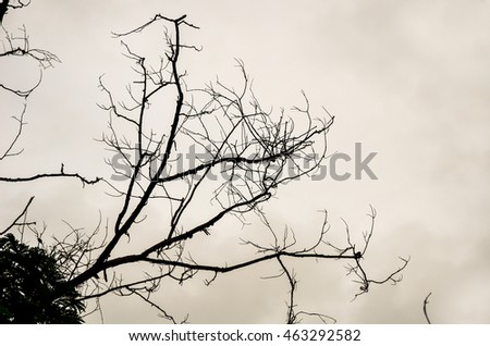 Twigs and twisted branch silhouette on overcast sky