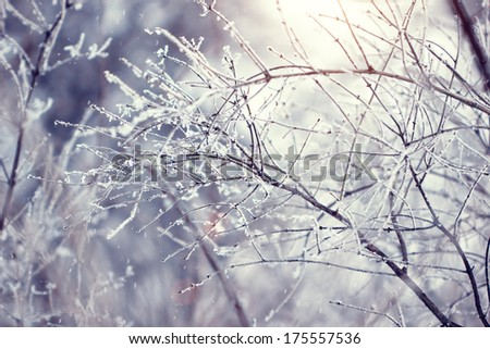 twigs covered with hoarfrost in winter - stock photo