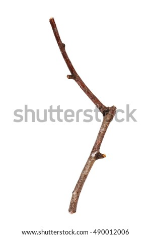 Twigs, macro dry branches birch isolated on white background, with clipping path