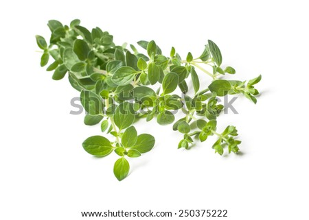 Twigs of oregano on a white background - stock photo
