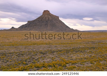 Twilight landscape with wildflowers in the Utah desert, USA. - stock photo