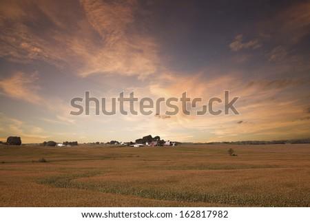 Twilight of the corn field in Iowa - stock photo