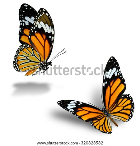 Twin flying Common Tiger Butterflies on white background with nice soft shadow beneath - stock photo