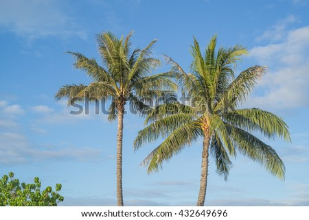 Twin Hawaiian Coconut Palm Trees with tropical blue sky backdrop.